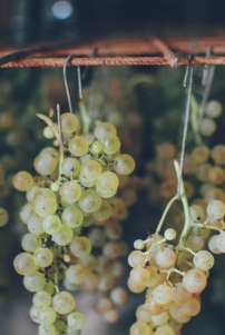 Grapes drying for Vin Santo