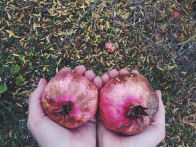 Freshly picked pomegranates